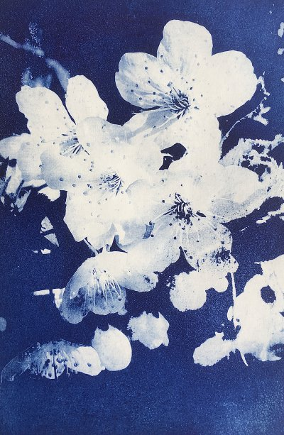 Blossom in Blue